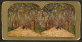Under the live oaks of a Florida Highway, from Robert N. Dennis collection of stereoscopic views 5.png