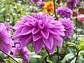 Une fleur dans le parc de Cheverny.jpg
