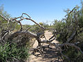 Usery Park, Mesa, Arizona.JPG