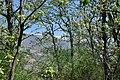 Valle del Jerte 10.jpg