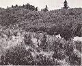 Vegetation of Oregon and Washington (1969) (19952894313).jpg
