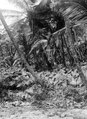 Vegetationsbild. San Blas. Panama - SMVK - 004402.tif