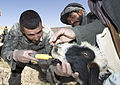 Veterinary Care Helps Build Relations With Nomadic Tribe DVIDS124837.jpg