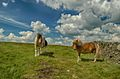 WINTER HILL PONIES-0001.jpg