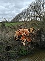 Wageningen after the storm of 18 Januari 2018 - 7.jpg