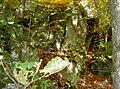 WaldmuenchenKatzbachFelsen 01.jpg