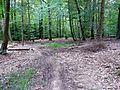 Waldweg zwischen Schlösslesmühle und Stetten - panoramio.jpg