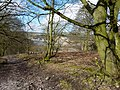 Walking up through Black Rocks Country Park - geograph.org.uk - 1734185.jpg