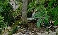 Walnut creek (29122262738).jpg