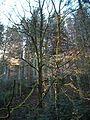 Wandern im November in Todtmoos - panoramio (9).jpg