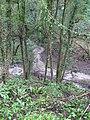 Wannock Glen - geograph.org.uk - 1133823.jpg