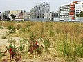Weeds in Vacant Lot (5941291239).jpg