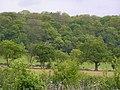 Weethley Wood - geograph.org.uk - 10614.jpg