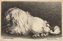 A 17th Century Engraving Of Poodle