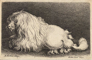 Poodle - A 17th-century engraving of a poodle