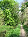 Wendover Arm, The trees return - geograph.org.uk - 1311804.jpg