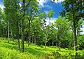 West Branch Research and Demonstration Forest (10) (27813790950).jpg