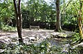 Whiddon Valley Woods, Barnstaple - geograph.org.uk - 1482492.jpg