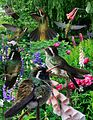 White-eared Hummingbird From The Crossley ID Guide Eastern Birds.jpg