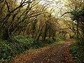 Whitehill Lane by Lidstone Quarry - geograph.org.uk - 1050298.jpg