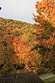 Wienerwald-Herbst 5439.JPG