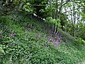 Wild Flowers - geograph.org.uk - 424139.jpg