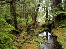 Windy Bay forest, Gwaii Haanas National Park Reserve
