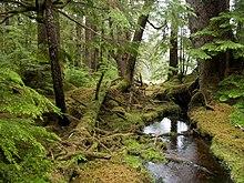 Windy Bay forest.jpg