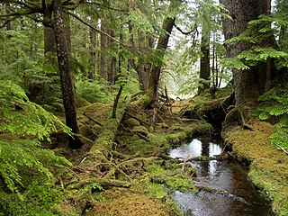 Temperate rainforest Forests in the temperate zone with heavy rainfall