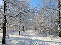 Winter in Visdonk, Roosendaal - panoramio.jpg