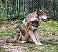 Wolf Tierpark Hellabrunn-10.jpg