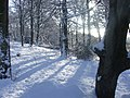 Woodland in the snow - geograph.org.uk - 1710807.jpg
