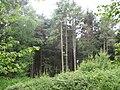Woodland near Roselyon - geograph.org.uk - 1311401.jpg