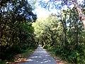 Woods Dundo - Kampor, Hrvatska - panoramio (1).jpg