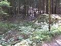 Wuestung Langenbach 1.JPG