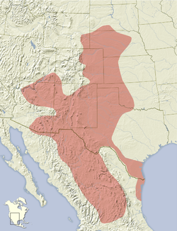 Xerospermophilus spilosoma distribution map.png