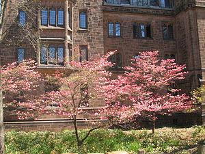 Walter B. Chambers - Chambers's Bingham Hall (1928) at Yale University