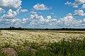 Yaroslavsky District, Yaroslavl Oblast, Russia - panoramio (37).jpg