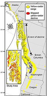 Yellow-cedar decline