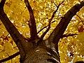 Yellow Canopy.jpg