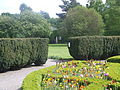 Yew hedge, formal garden of Pearse Museum.JPG