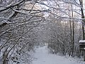 Zimska pout, Verica (1).JPG