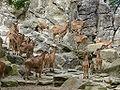 Zoo034.jpg