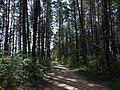 Zubtsovsky District, Tver Oblast, Russia - panoramio (33).jpg