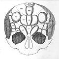 """Anatomie et physiologie..."" F.J. Gall & J.C. Spurheim, 1810 Wellcome L0020349.jpg"
