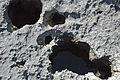 """Swiss cheese limestone"" (Pain Pond, San Salvador Island, Bahamas) 1 (16322267522).jpg"