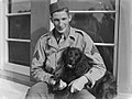 (Portrait of a US military sergeant seated with a black cocker spaniel dog) (AM 76789-1).jpg