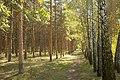 Алеї у Докучаєвському дендропарку.jpg