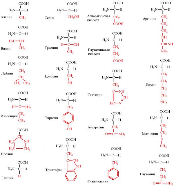 аминокислоты лизин и аргинин купить
