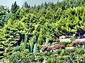 Вид с берега на парк дома отдыха Айвазовский.JPG